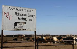 At McPherson County Feeders, 11,000 cattle produce a lot of waste. (Photo by Jeremy Bernfeld, Harvest Public Media)