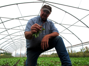 Bob Bernt checks on radishes growing in a hoop house. The Bernts have a 20-acre vegetable field, but their main products are butter, cheese, and ice cream from their grass fed dairy. (Photo by Grant Gerlock, NET News/Harvest Public Media)