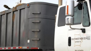 Jeff Wallin's truck is filled with cattle carcasses killed by a blizzard last week in northwest Nebraska. (Photo by Fred Knapp, NET News)