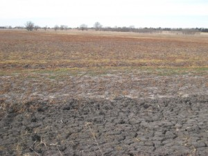 A look at the dry wetland at McMurtry. Sanchez's group sometimes pumps up untreated groundwater to help fill the wetlands during dry years. (Photo by Ariana Brocious, NET News)