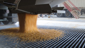 Critics of the EPA's proposal to cut the ethanol mandate say it will keep the industry from moving beyond corn-based biofuels. (Photo by Grant Gerlock, NET News/Harvest Public Media)