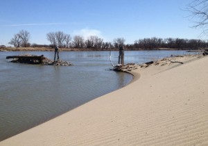 Since the flood of 2011 this river bank at the edge of Olson's farm field has looked more like a sand dune. (Photo by Grant Gerlock, NET News / Harvest Public Media)