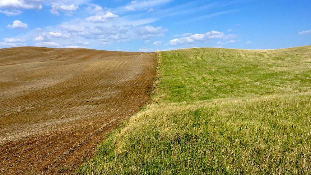 There are many factors behind the loss of grassland and native prairie in North Dakota, and the expansion of the Corn Belt is one of them. Here, a former grassland in Stutsman County, N.D., has been turned into cultivated fields. (Photo by Emily Guerin, Inside Energy)