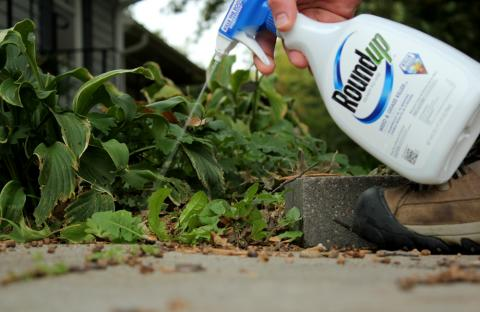 The vast majority of glyphosate is used on farm fields, on crops that are modified to withstand the herbicide. But it is also common on lawns and gardens. (Grant Gerlock/Harvest Public Media)